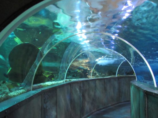 le tunnel aux requins photo de grand aquarium de touraine lussault sur loire tripadvisor