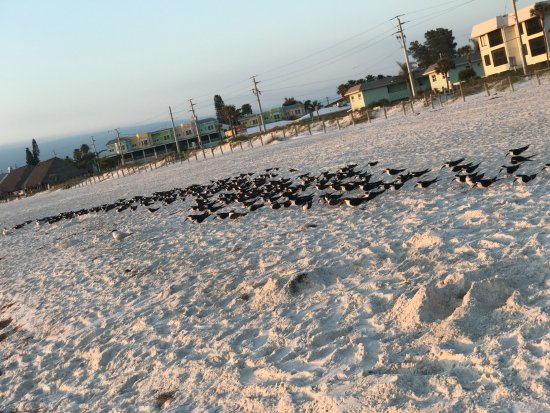 Bradenton Beach, Флорида: the birds watching sunset