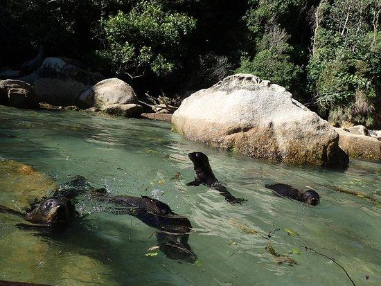 Kaiteriteri Kayaks Photo