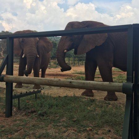 Hartbeespoort, Republika Południowej Afryki: Amazing experience
