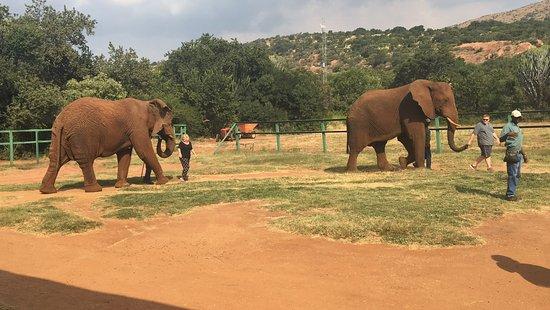 Hartbeespoort, Afrika Selatan: Amazing experience