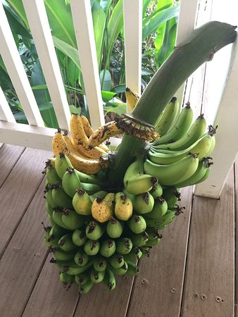 Holualoa, Χαβάη: The bananas were DELICIOUS