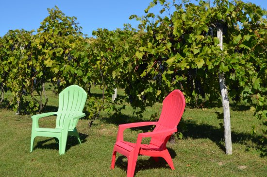 Hammond, NY: Relax in the vineyard with a glass of Bella-Brooke wine.