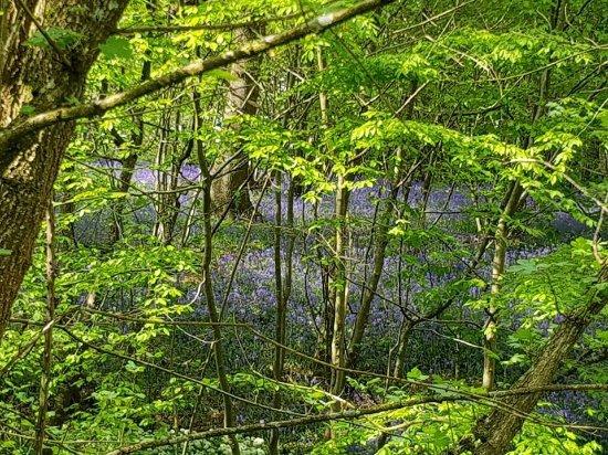 Stump picture of hole park gardens rolvenden tripadvisor for Garden trees kent