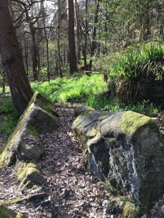 Hebden Bridge, UK: Woodland walk at Hardcastle Crags