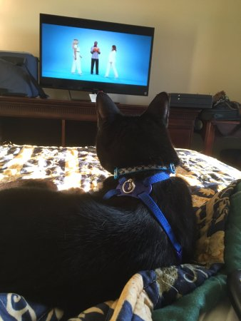 Eau Claire, WI: Comfy bed! Even the cat enjoyed the TV!