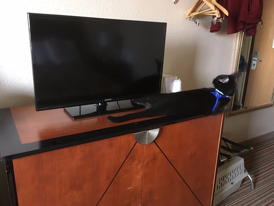 Knights Inn and Suites Grand Forks: Cat-approved TV set-up!