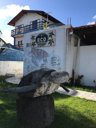 Museu das Tartarugas - Ecoassociados
