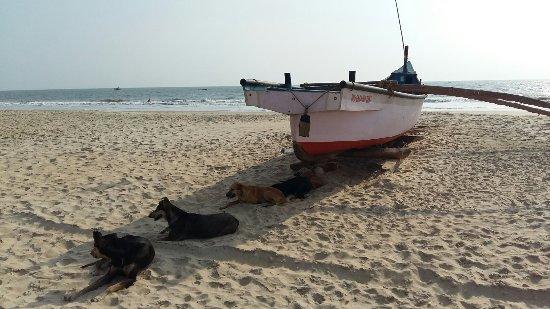 Benaulim Beach: 20170407_163826_large.jpg