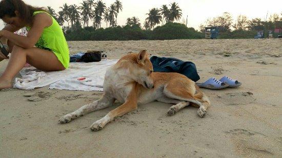 Benaulim Beach: IMG-20170413-WA0005_large.jpg