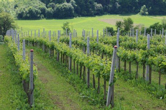 Chodorowa Winery