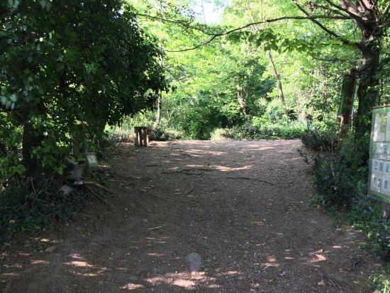 Inverigo, Italy: Giardino botanico e dintorni