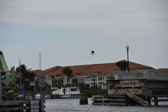 Melbourne, FL: Male Osprey Just Caught a fish to bring back to the nest