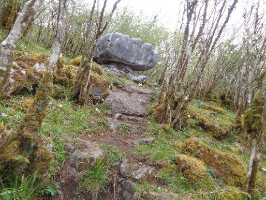 Corofin, Irlandia: Big mushroom:)
