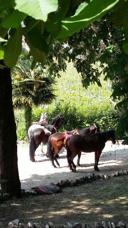Villa Monteleone: IMG-20170423-WA0070_large.jpg