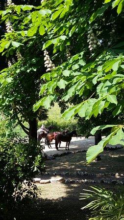 Villa Monteleone: IMG-20170423-WA0067_large.jpg