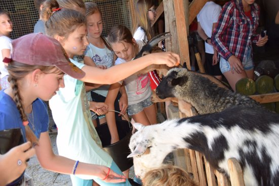Farma LaMa: Our TEIP students feeding the goats.