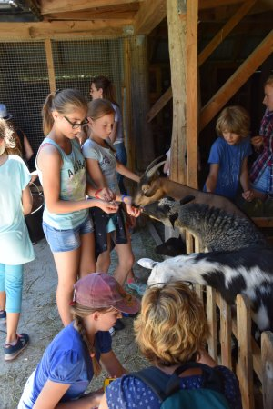 Farma LaMa: Some of our students had never seen a goat live.