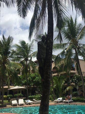 Aquarius Club: Il giardiniere stava potando le palme e ci ha aperto due noci di cocco freschissime!