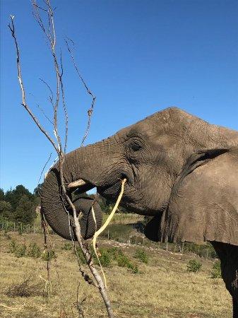 Knysna Elephant Park: IMG-20170424-WA0003_large.jpg