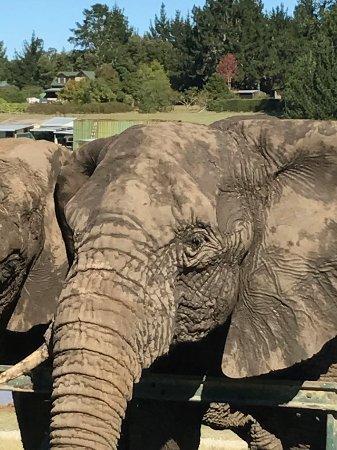 Knysna Elephant Park: IMG-20170424-WA0002_large.jpg