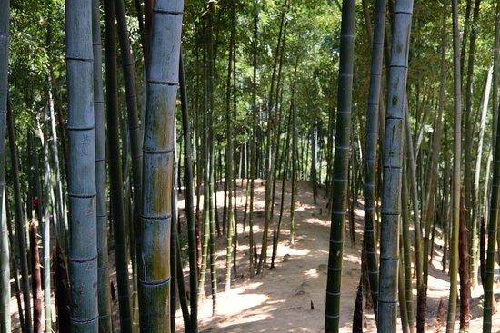 Anji County, China: photo4.jpg