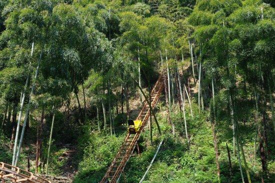 Anji County, China: photo5.jpg