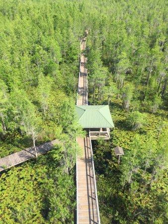 Grand Bay Wildlife Management Area: photo1.jpg