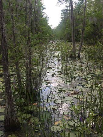 Grand Bay Wildlife Management Area: photo2.jpg