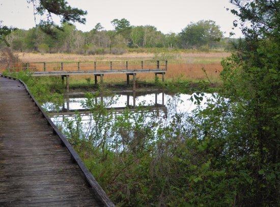Lake Panasoffkee, FL: Gator hole
