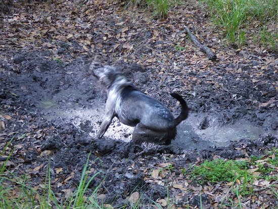 Lake Panasoffkee, FL: Moddey Dhoo found mud
