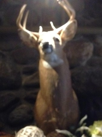 The Park Grill: Oh deer!