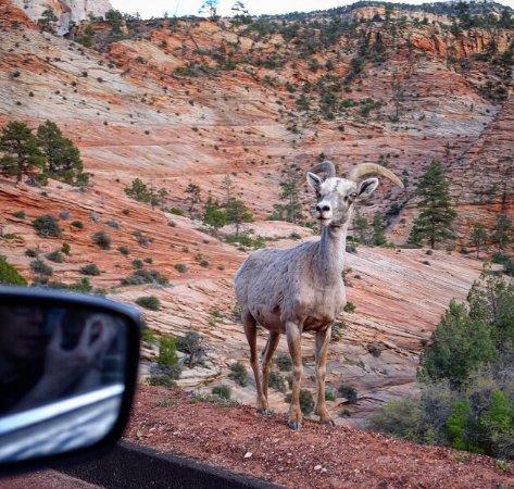 Zion Canyon Scenic Drive: photo0.jpg