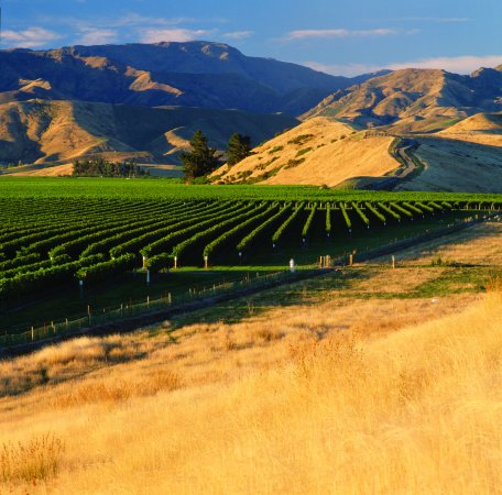 Renwick, Nueva Zelanda: Dog Point Vineyard
