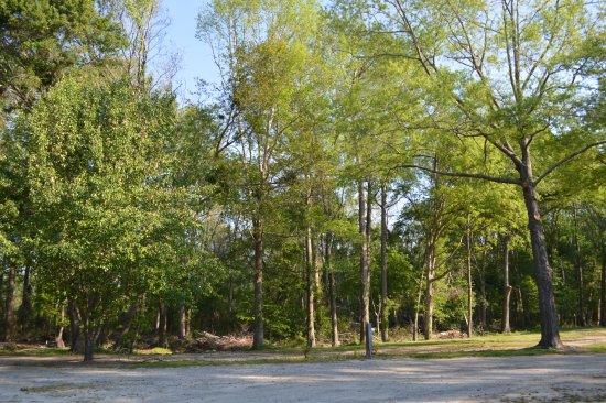 Lumberton I-95 KOA RV Park: Pretty property!