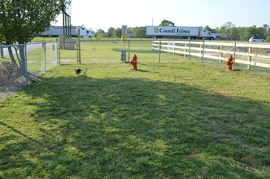 Lumberton I-95 KOA RV Park : Dog park with a very happy weenie!