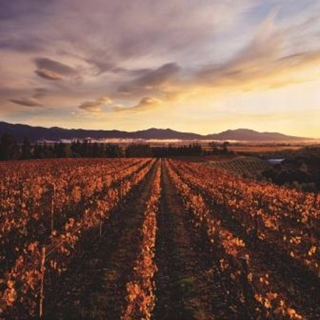 Renwick, Nueva Zelanda: Sunrise at Dog Point Vineyard
