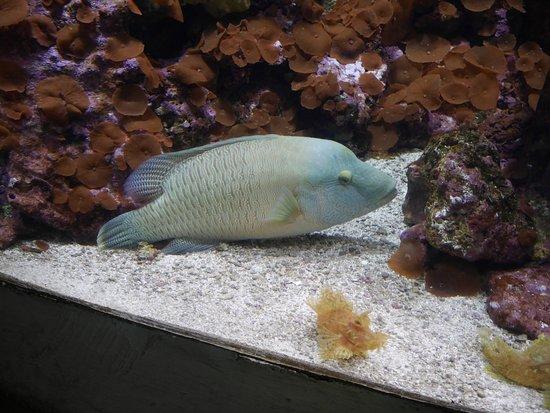 Looks like a face picture of dallas world aquarium for Blue fish dallas