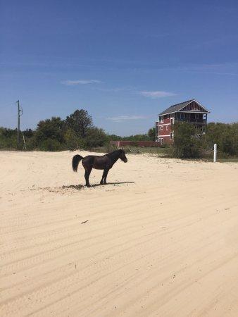Carova Beach: photo2.jpg