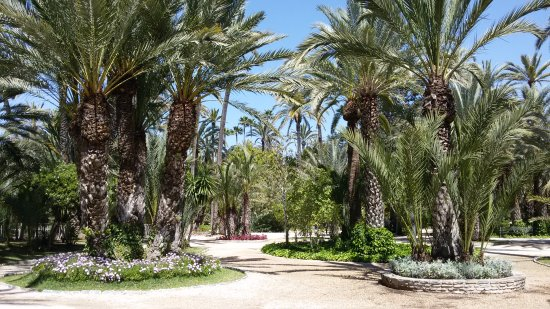 20170411_134330_large.jpg - Picture of Palm Groves (Palmeral) of Elche, Elche...