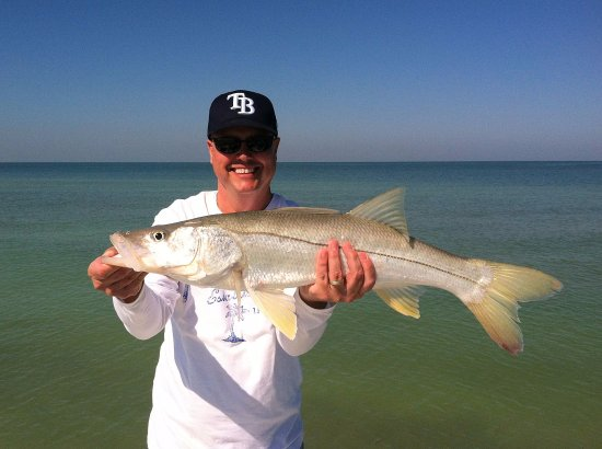 Summer snook picture of capt brian caudill inshore for Clearwater beach florida fishing charters