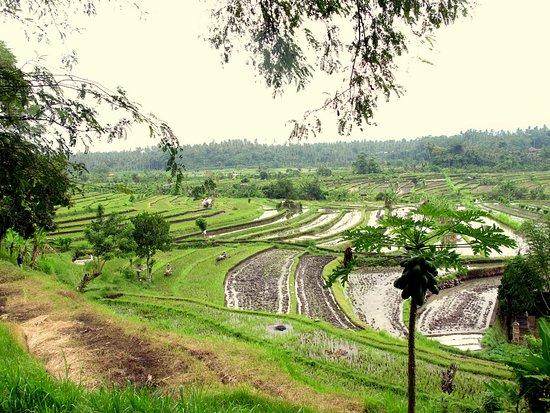Kerobokan, Indonésia: On the way to Amed