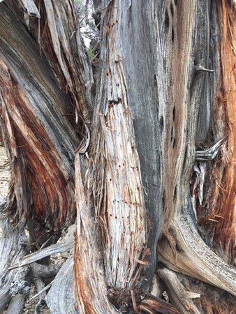 Petrified wood at Escalante Petrified Forest State Park - wood