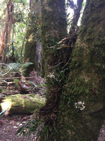 Taupo, New Zealand: photo5.jpg