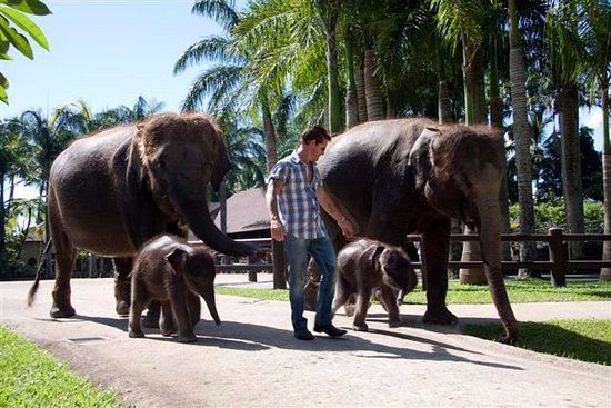 Тегалаланг, Индонезия: Park Founder Nigel Mason with Entourage (2009)