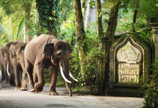 Tegalalang, إندونيسيا: Park Entrace