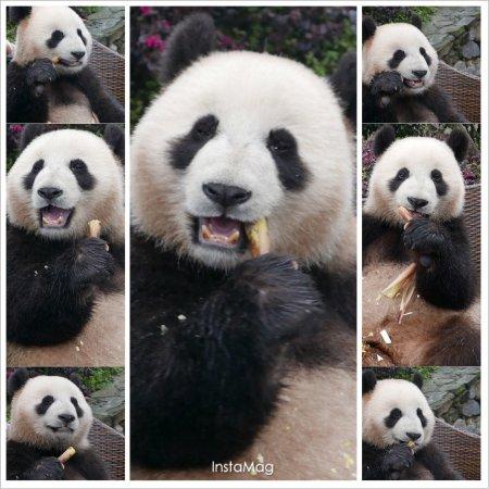 Dujiangyan, Kina: photo0.jpg