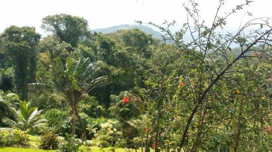 Nuevo Arenal, Costa Rica: geflegter Garten