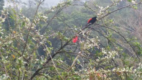 Nuevo Arenal, Costa Rica: Vögel