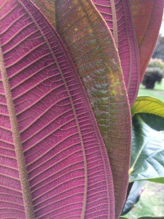 Jardín Botánico de Bogotá Jose Celestino Mutis: variedad de  flora